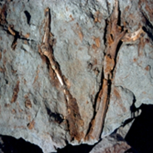 antarctic tropical forests fossilized antartica